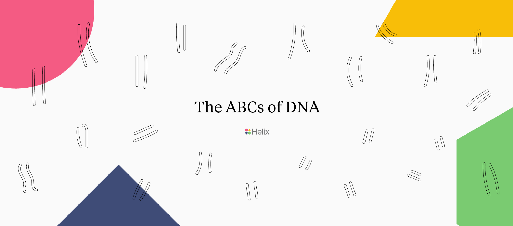 The ABCs of DNA