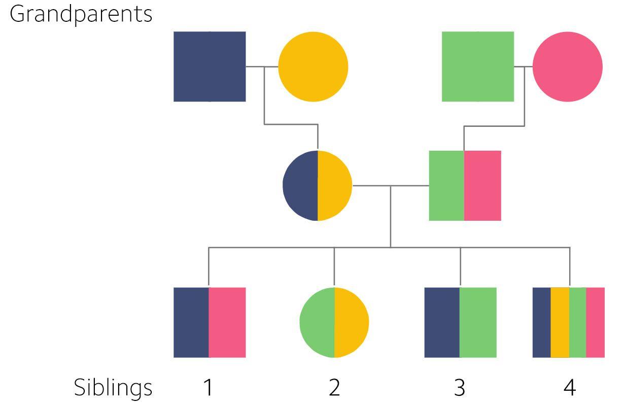 ancestry diagram