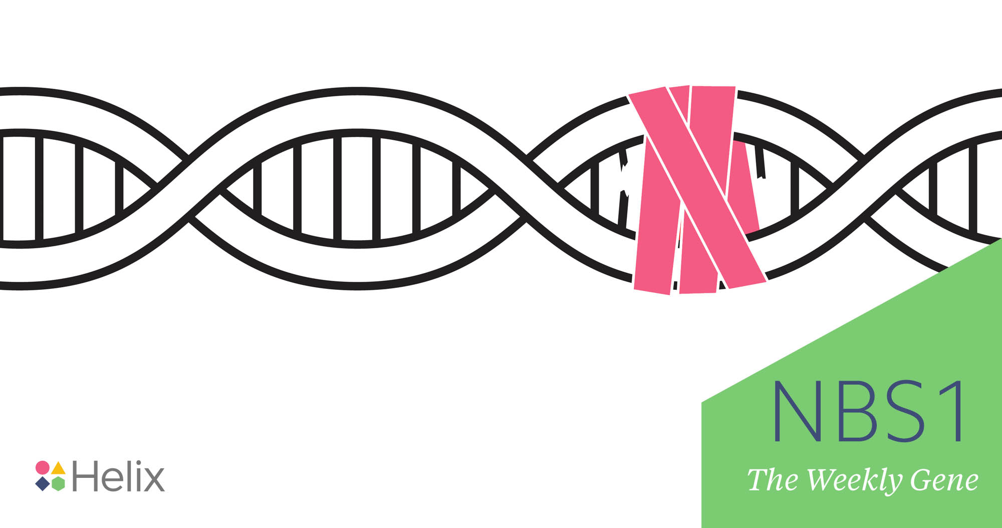 The Weekly Gene: NBS1
